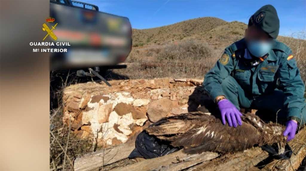 La Guardia Civil detiene y/o investiga a más de 300 personas por delitos contra la biodiversidad.