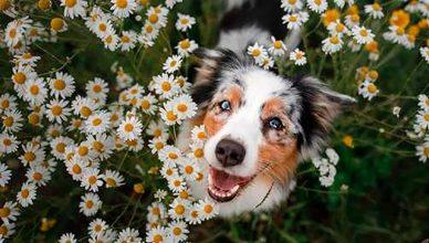 Consejos para disfrutar con tu perro de la primavera.