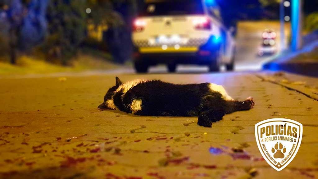 El Ministerio de Justicia está trabajando en la reforma de la Ley de Enjuiciamiento Criminal (LECrim), una ley que también es muy importante para las Fuerzas y Cuerpos de Seguridad y Agentes Medioambientales desde el punto de vista de la investigación de los delitos contra los animales, ya que cada vez son más las intervenciones policiales en estas situaciones.