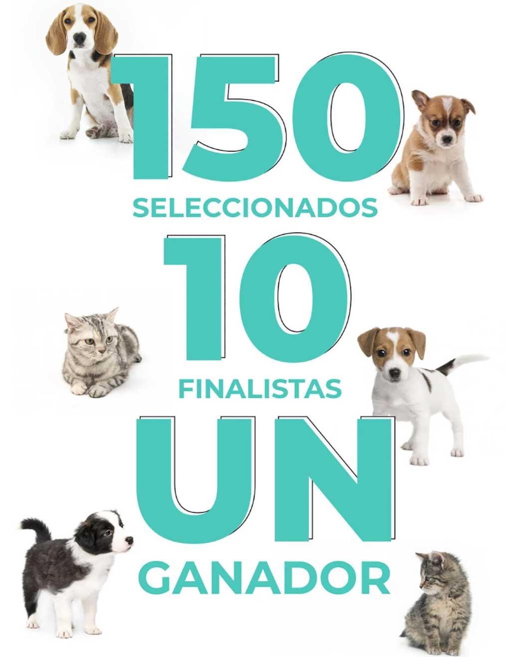 """Dinbeat busca a la clínica veterinaria más """"pet centric"""" de España."""
