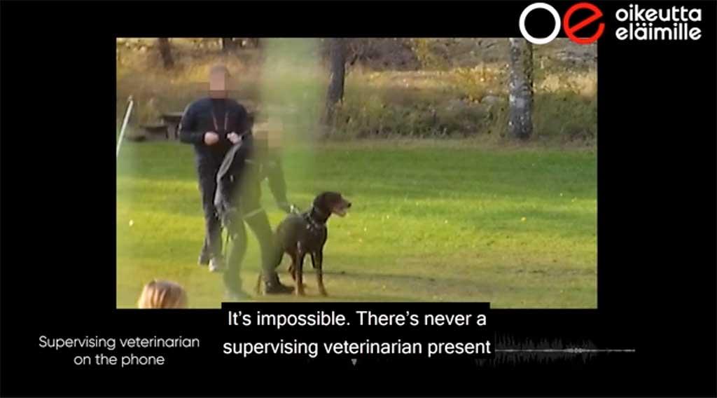 Cancelados todos los deportes con perros de protección en Finlandia.