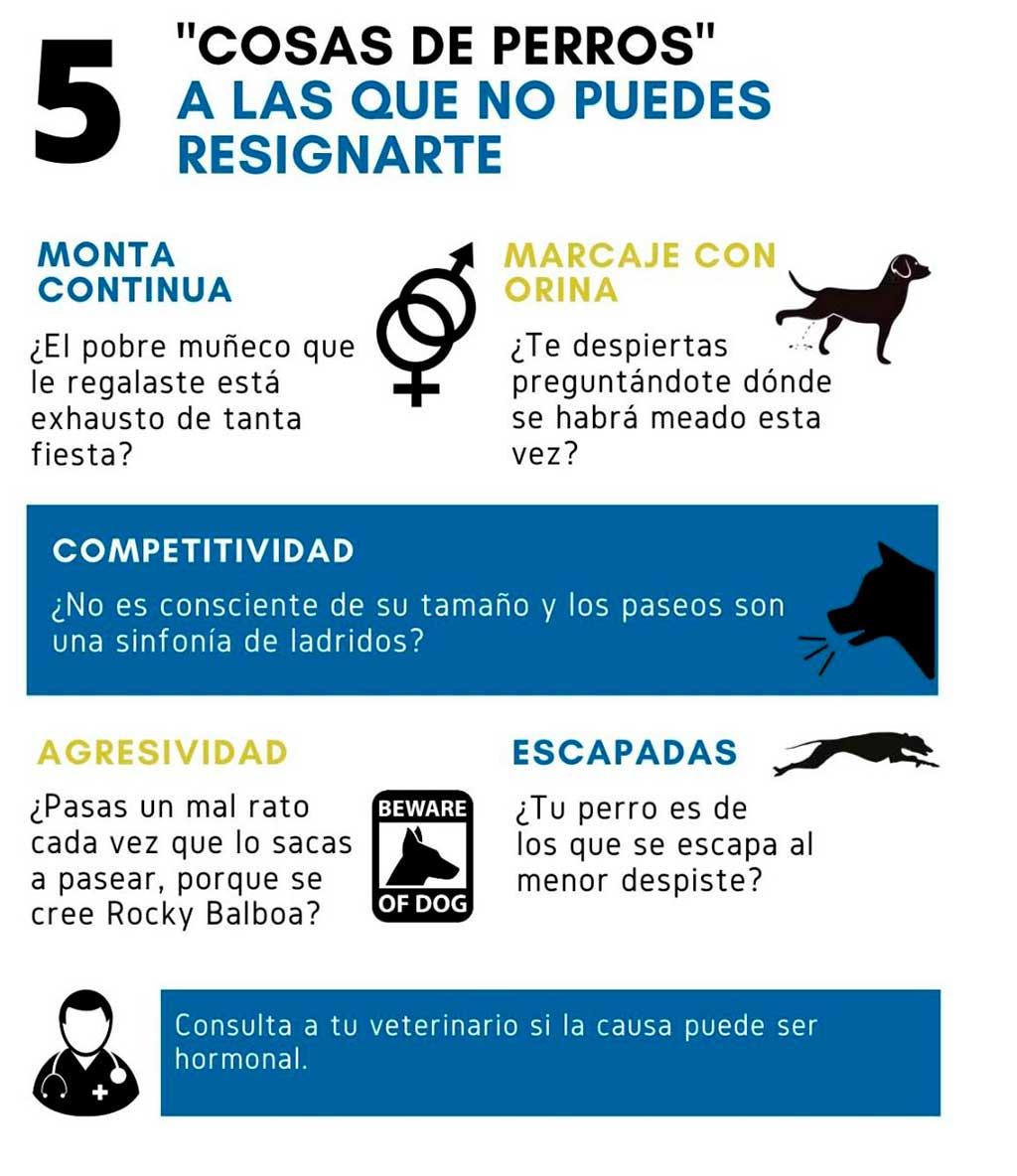 Machismo perruno: 5 conductas socialmente aceptadas en perros, pero desagradables para el propietario.