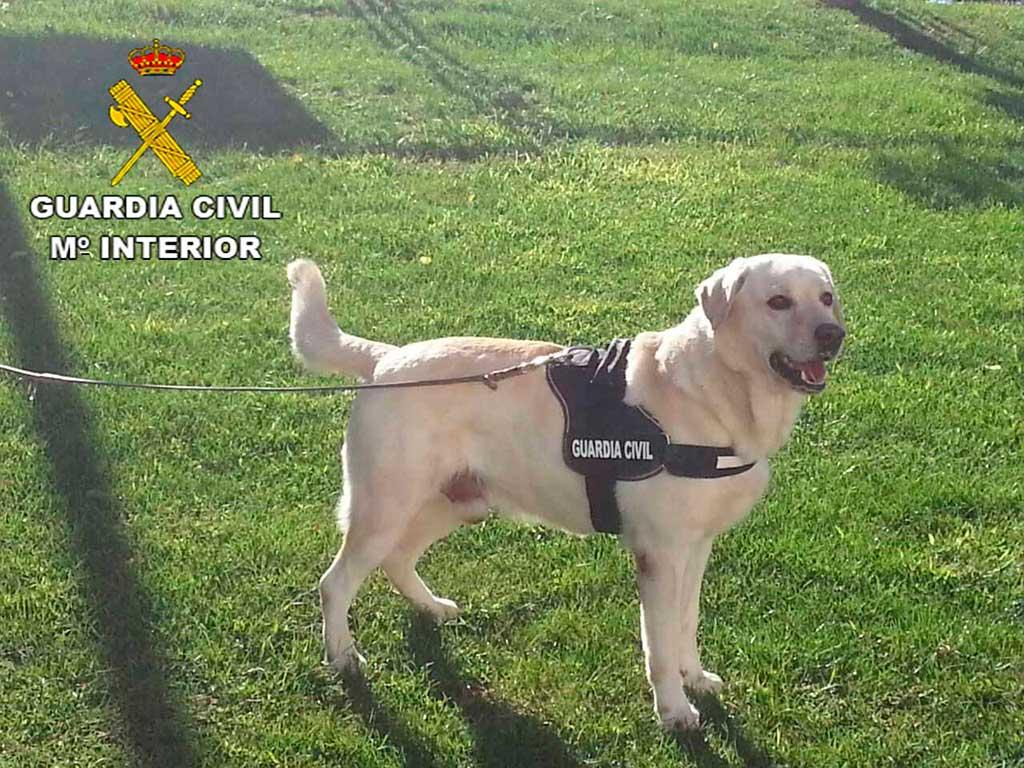 Proyecto de la UGR que analiza el olfato de los perros policía y su valor para obtener pruebas.