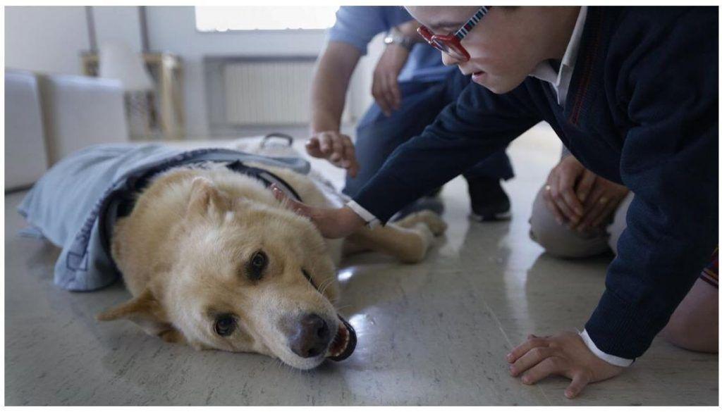 Perros detectores de diabetes, proyecto en marcha en A Coruña.