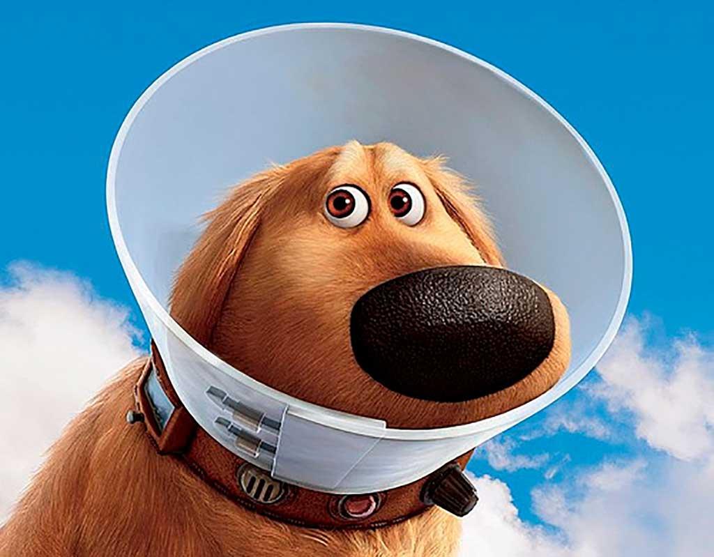 """Por qué está """"de moda"""" la esterilización obligatoria de los perros."""