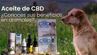 Aceite de CBD en perros: ¿para qué sirve?