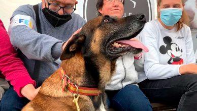 Perros policía regresan a las aulas para mejorar la estimulación sensorial y motriz de personas con diversidad funcional.