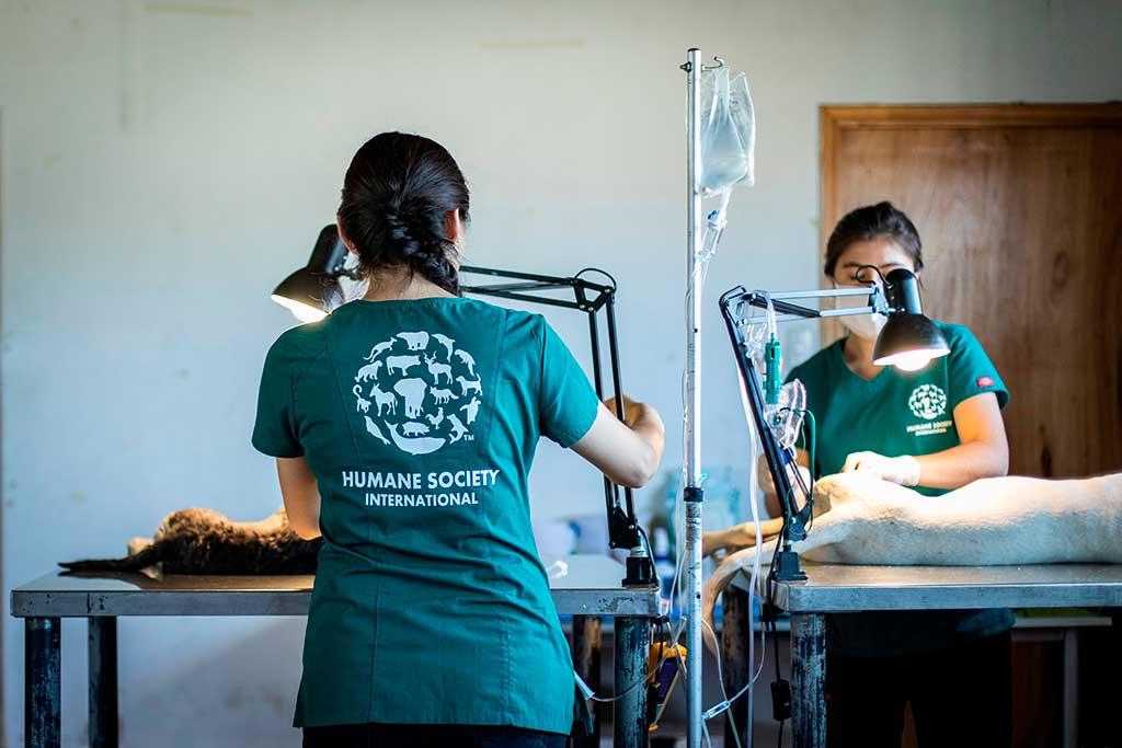 Edgard & Cooper apoya a Human Society International donando 188.864€.