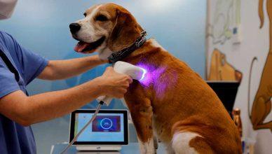 HTVet: Llega a España la primera herramienta de imagen no invasiva para la detección del cáncer en perros y gatos