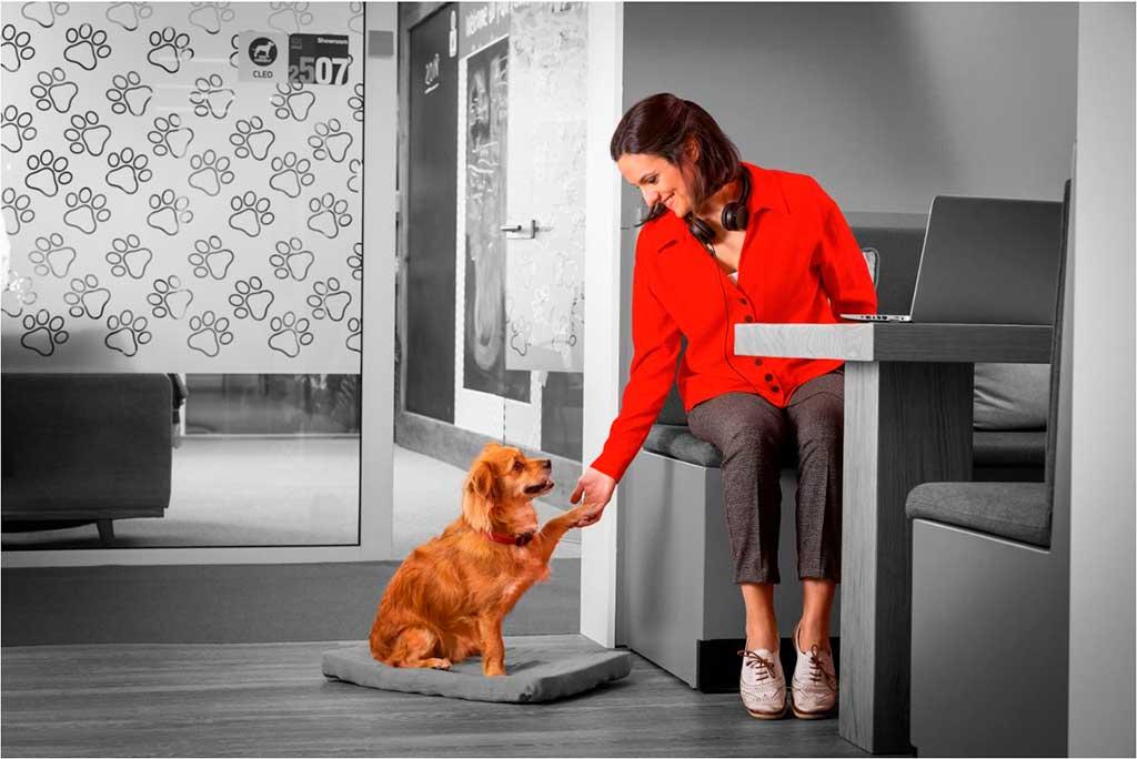 21 de junio: Día Mundial de llevar al Perro al Trabajo.