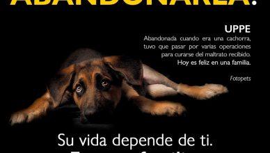 Lasmhi, Menta, Fanny, Thomas, Limón, Megan, Wanda y Uppe son ejemplos reales de las consecuencias del abandono de animales.