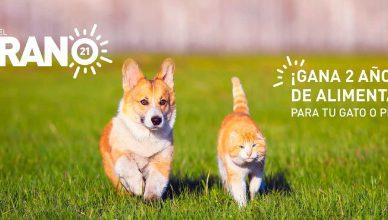 #Mascotadelverano21 y podrás ganar hasta dos años de alimentación gratuita de Royal Canin