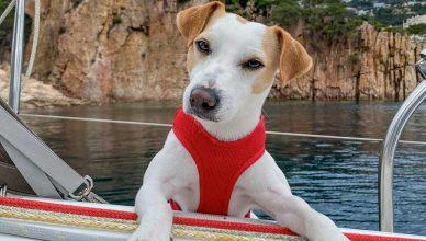El perro Pipper, embajador de 100X100 mascota.