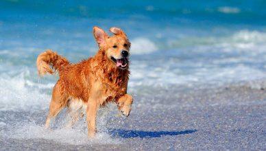 7 consejos para un día de playa con tu perro.