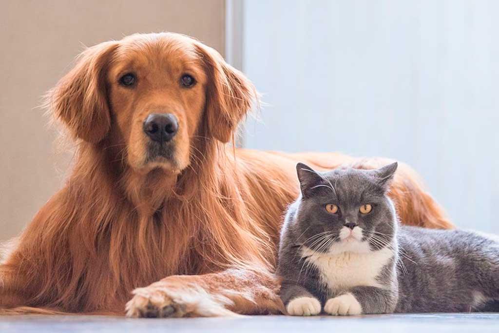 Los problemas de piel más comunes de perros y gatos en verano.