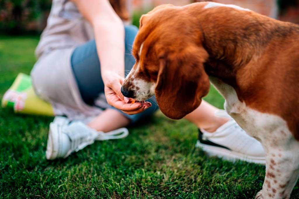 Ya sea para el tiempo de adiestramiento, para jugar o para un tentempié antes de dormir, a todos los dueños les gusta dar snacks a sus perros.