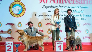 Exposición Internacional Canina de Primavera y de Otoño de Madrid en solo dos días.