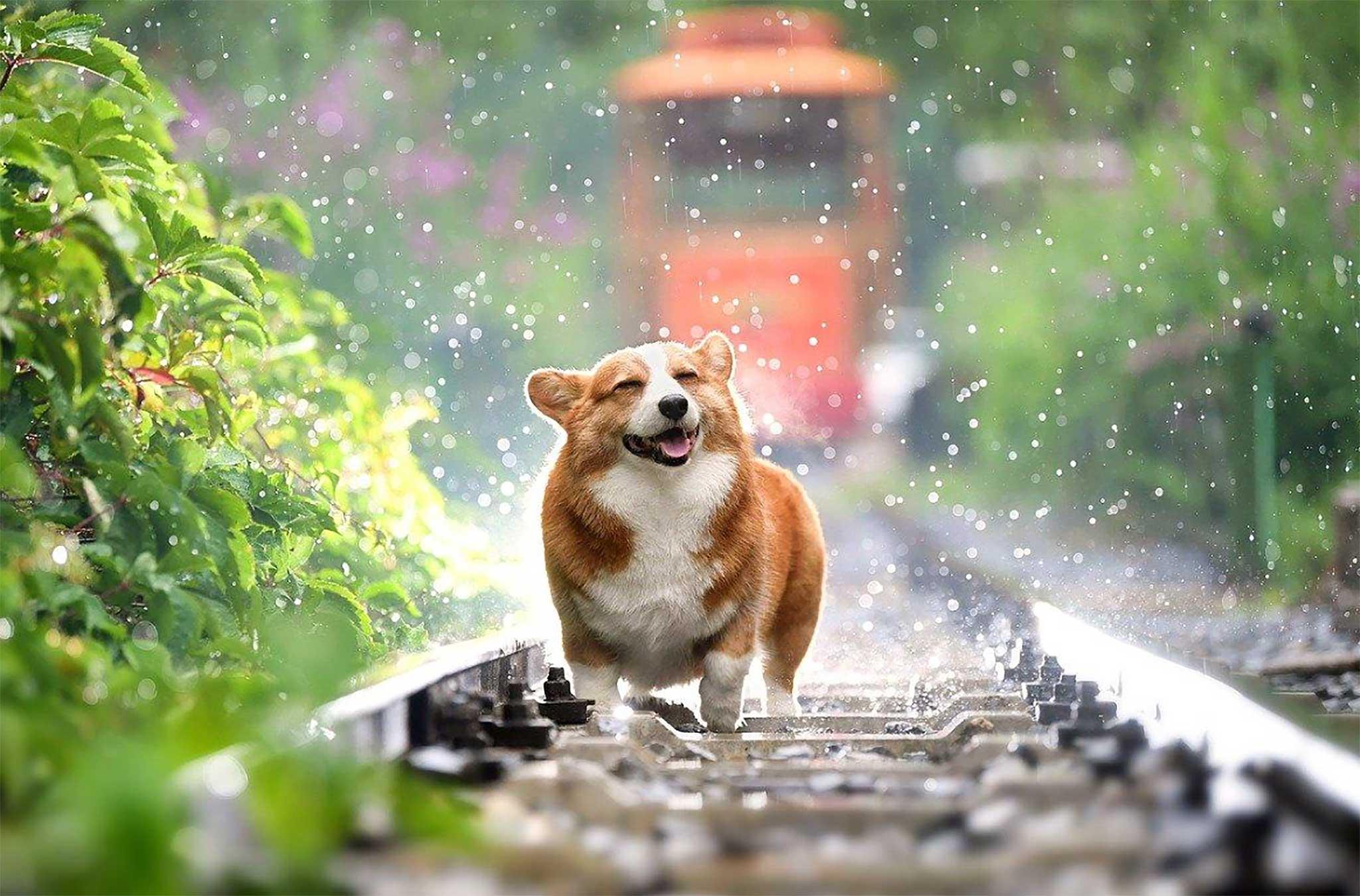 """No dejes a tu perro solo durante las vacaciones y encuentra un """"dog sitter""""."""