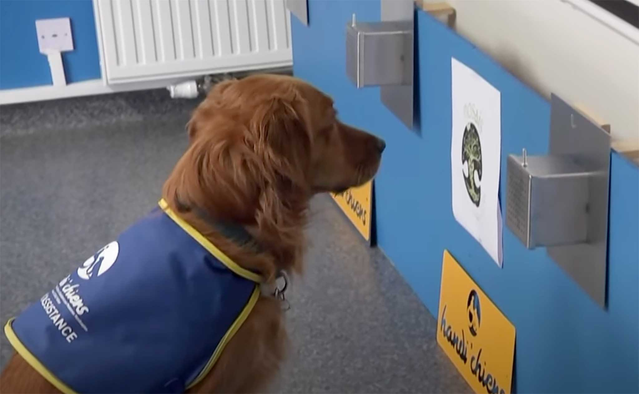 ¿Confiarías en un perro detector de covid para entrar en una residencia?