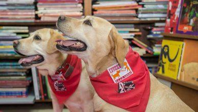 Perros y Letras, perros que enseñan a leer.