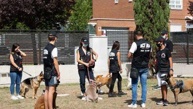 Proyecto piloto de adiestramiento canino dirigido a adolescentes .