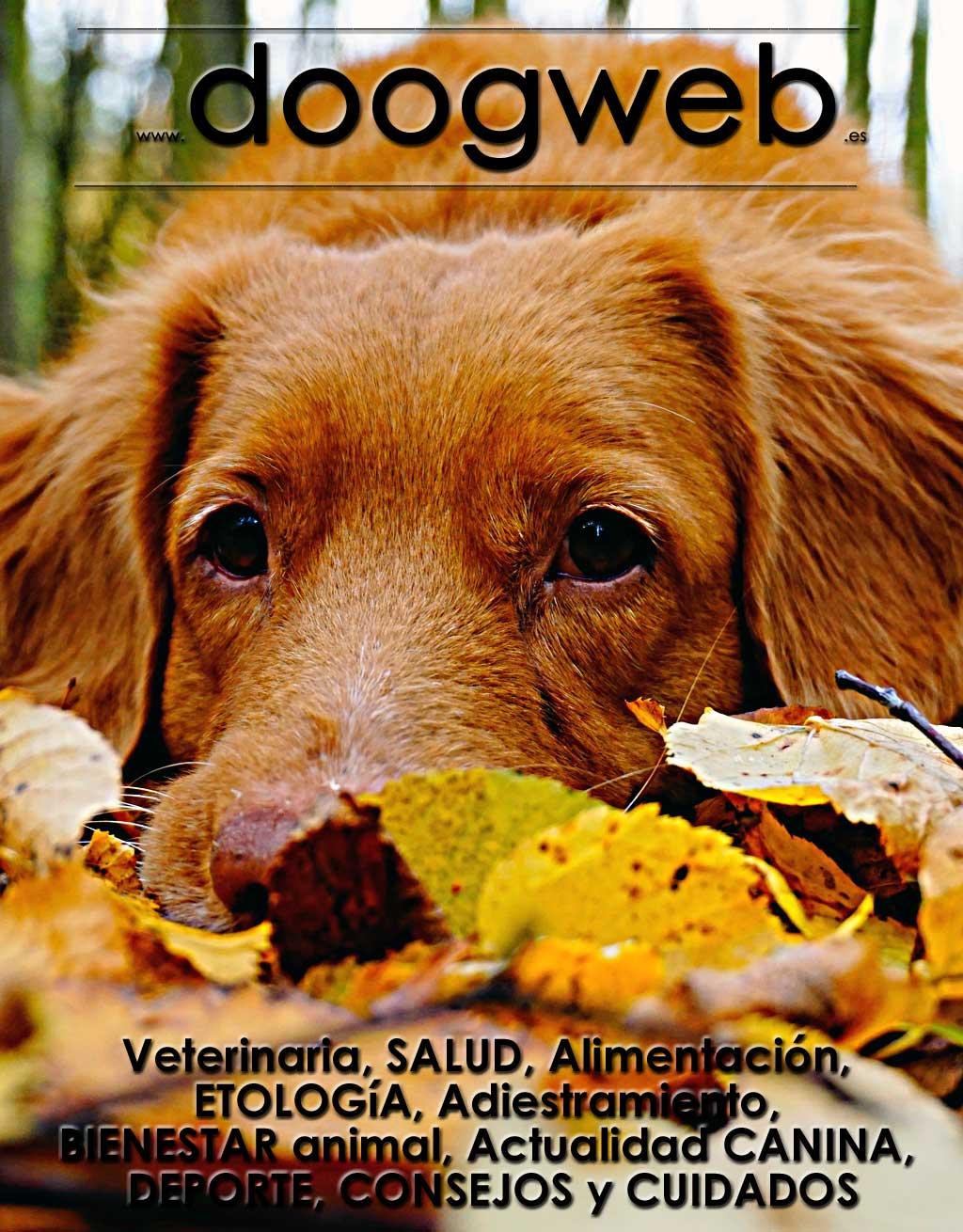 Revista gratis doogweb nº 108, septiembre 2021