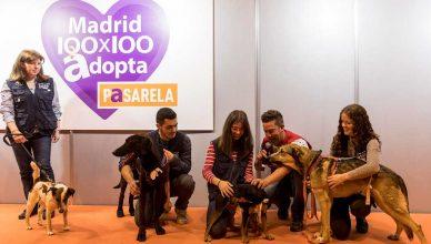 100x100 MASCOTA 2021 convoca la Comunidad de Perros Solidarios