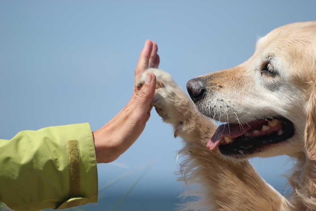 Las mejores razas para perros de terapia...