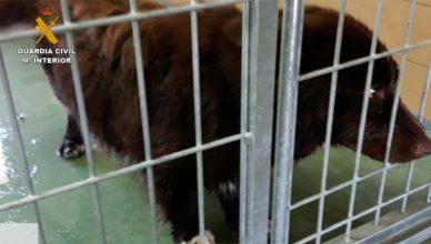 Perros muertos y maltratados en una residencia canina ilegal en Navalcarnero.