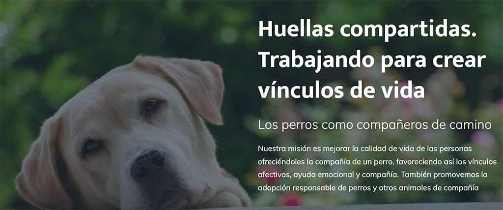#vínculosquedanvida Un retrato de los beneficios de la relación entre personas y perros.