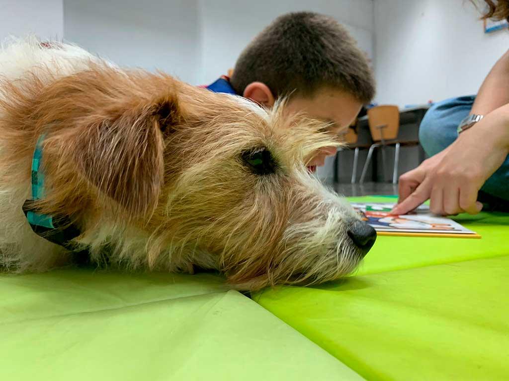 Las intervenciones asistidas con animales y su efecto directo en el bienestar de las personas.