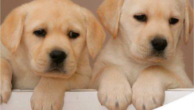 """Concurso """"Ponle nombre a un perro guía""""."""